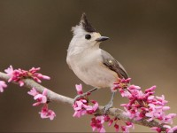 Cute Sparrow HD image