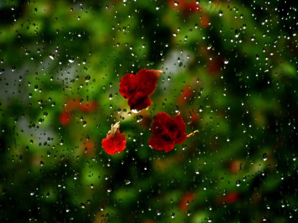 Rainy Season HD Wallpapers 2016