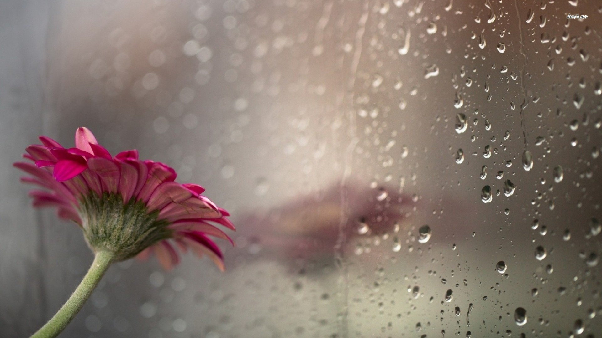 rainyseasonhdwallpaperfree hd wallpaper