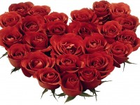 Attractive-red-roses-flowers-hd-free-wallpaper