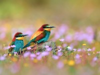 Wallpaper With colorful Birds images