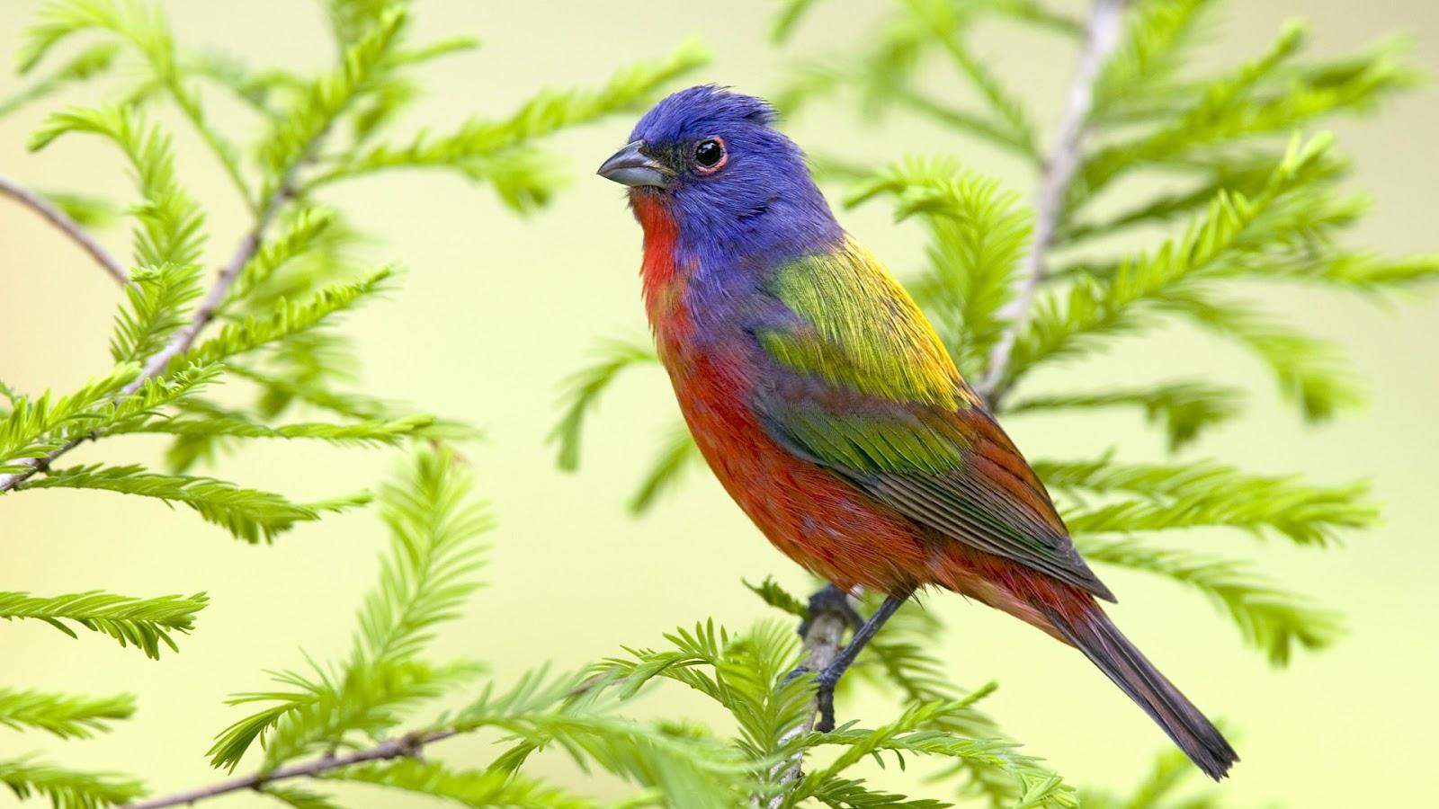 Beautiful Bird Sitting On Branch Hd Bird Animal Hd Wallpaper