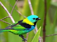 cool-colorful-birds-wallpaper-free-download