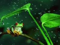 frog in rainenjoy wallpapers