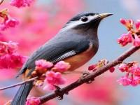 hd-beautiful-bird-wallpapers