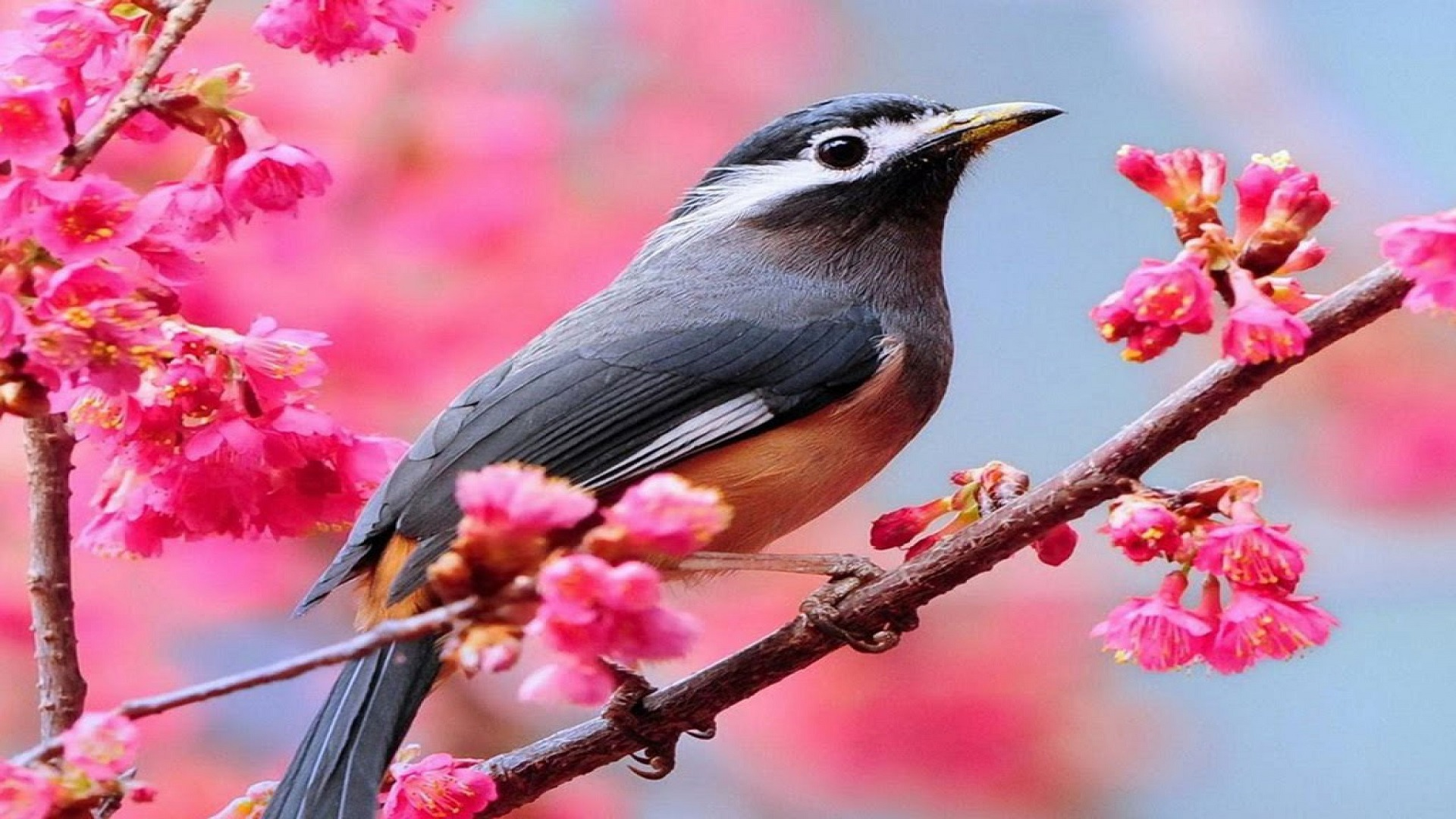 Hd Beautiful Bird Wallpapers Hd Wallpaper