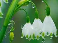 flowers in rain wallpapers