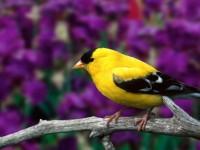 lovely bird hd image