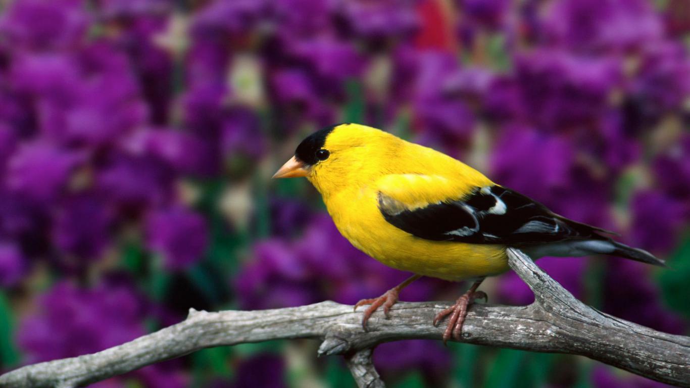 lovely bird hd image - hd wallpaper