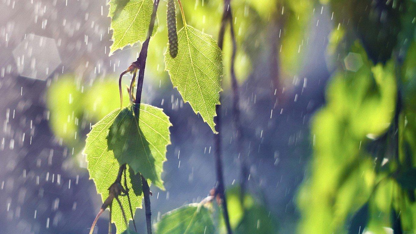 rain-wallpaper-free