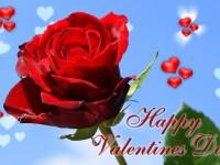 sweet-rose-wallpaper-valentine-day-free-beautiful-hd
