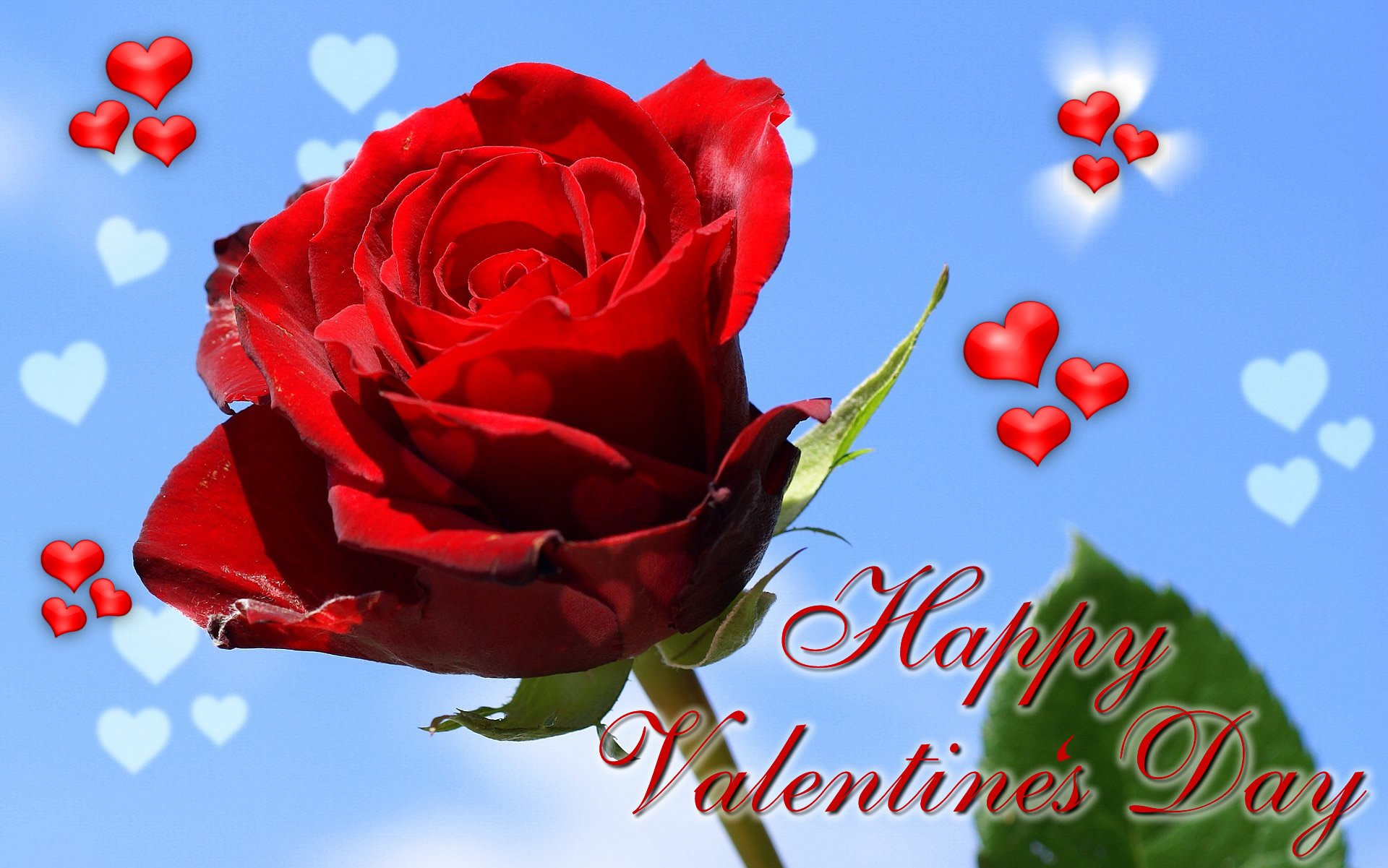 sweet-rose-wallpaper-valentine-day-free-beautiful-hd - hd wallpaper