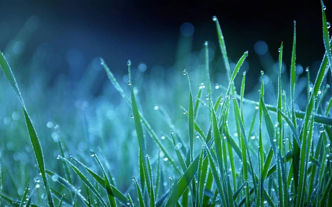 winter_season_grass_on_water_drops-1280x800 - HD Wallpaper