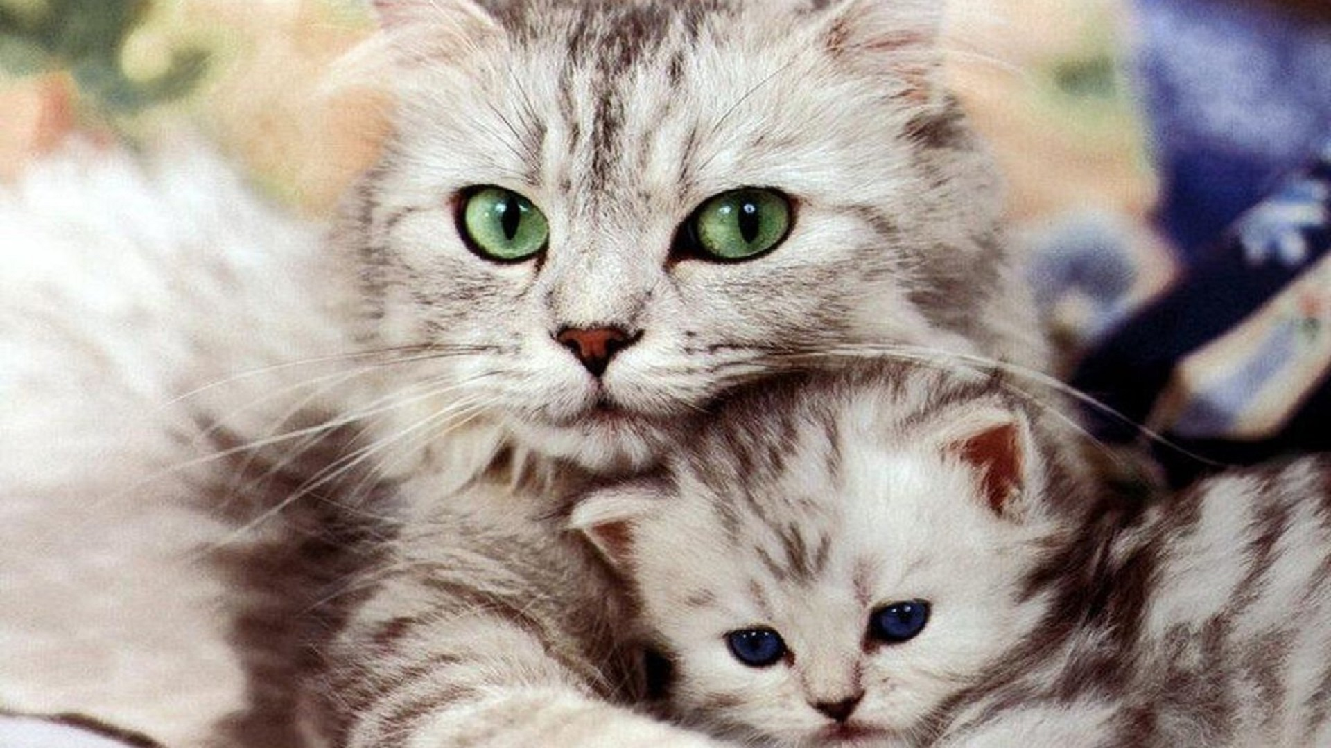 Beautiful Cat and Kitten cats free hd wallpapers HD Wallpaper