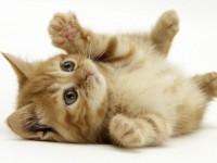 Beautiful-Little-Cat-free-hd-wallpapers
