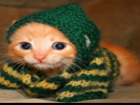 Beautiful_cats_wearing_cute_dress-free-hd-wallpapers