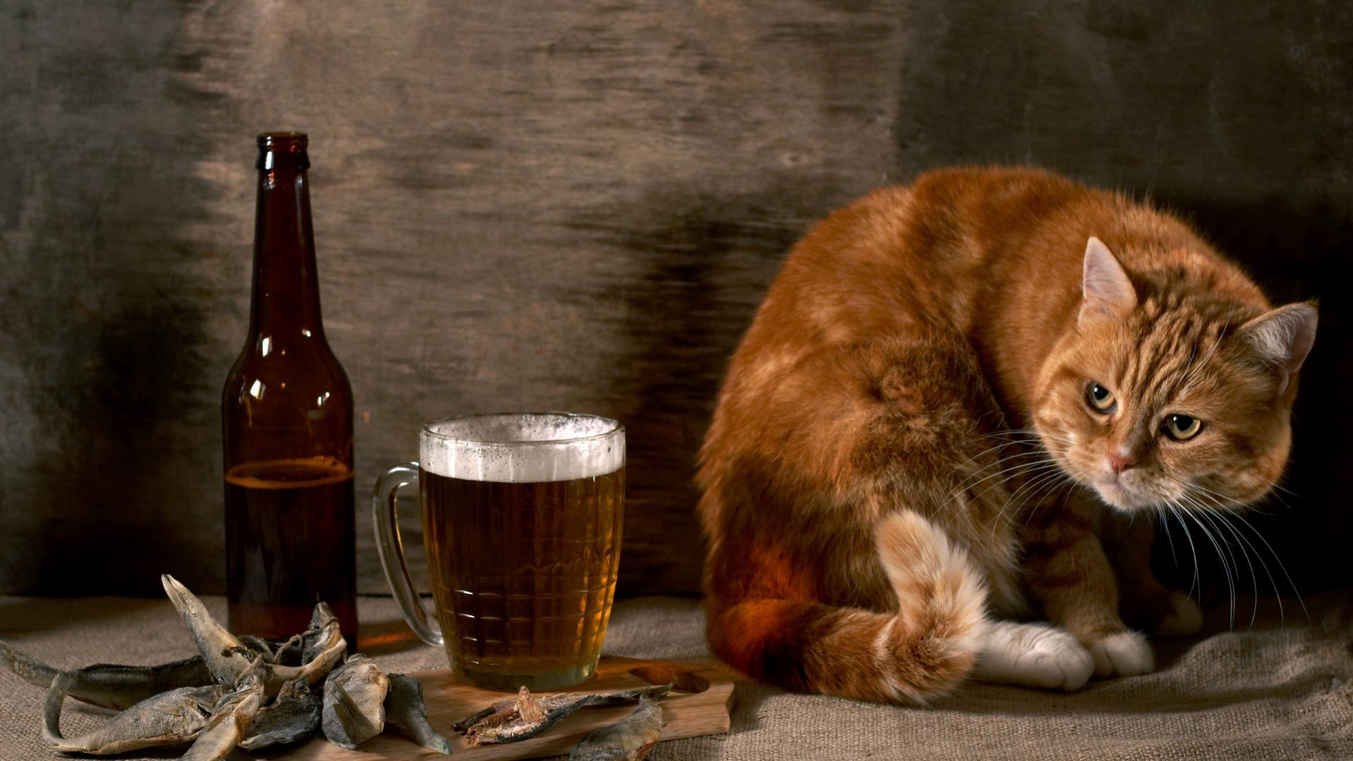Cat-And-Beer-Funny-Animal-Wallpaper-HD-free-for-desktop ...