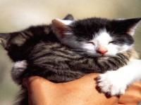 beautiful-cat-cats-cute-wallpapers-free-hd