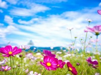 beautiful-flowers-summer-season-hd-wallpapers-free