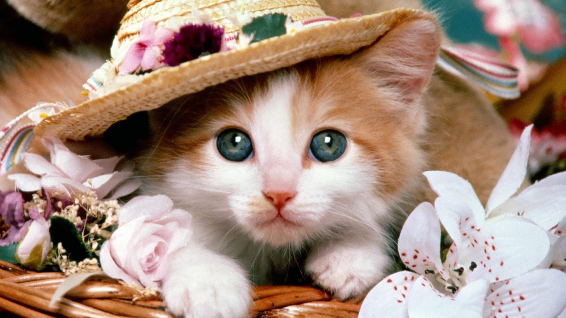 Beautiful Hat And Cute Free Cat Hd Widescreen Wallpaper Hd Wallpaper