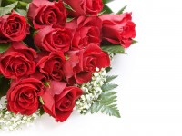 Beautiful Red Roses Wallpapers Free Download For Desktop Mobile