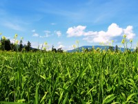 full-summer-season-best-field-scene-hd-wallpapers-free