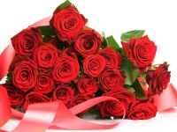 lovely-red-roses-free-hd-wallpapers