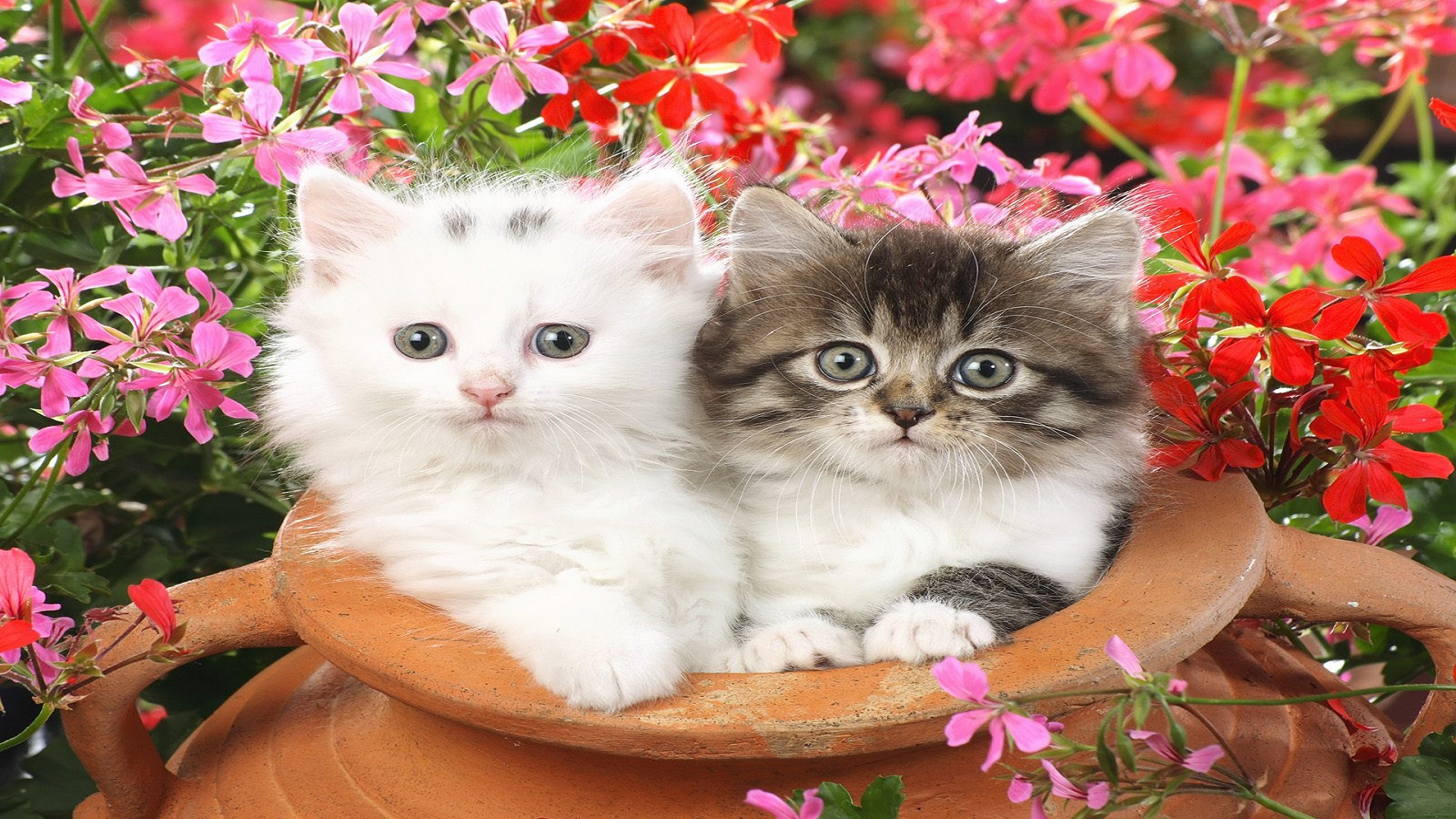 Most Beautiful Cats Wallpapers Hd Free For Cat Lovers