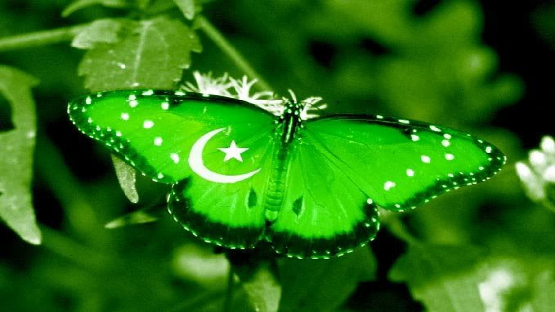 Pakistan Best Wallpapers Hd Free For You Hd Wallpaper