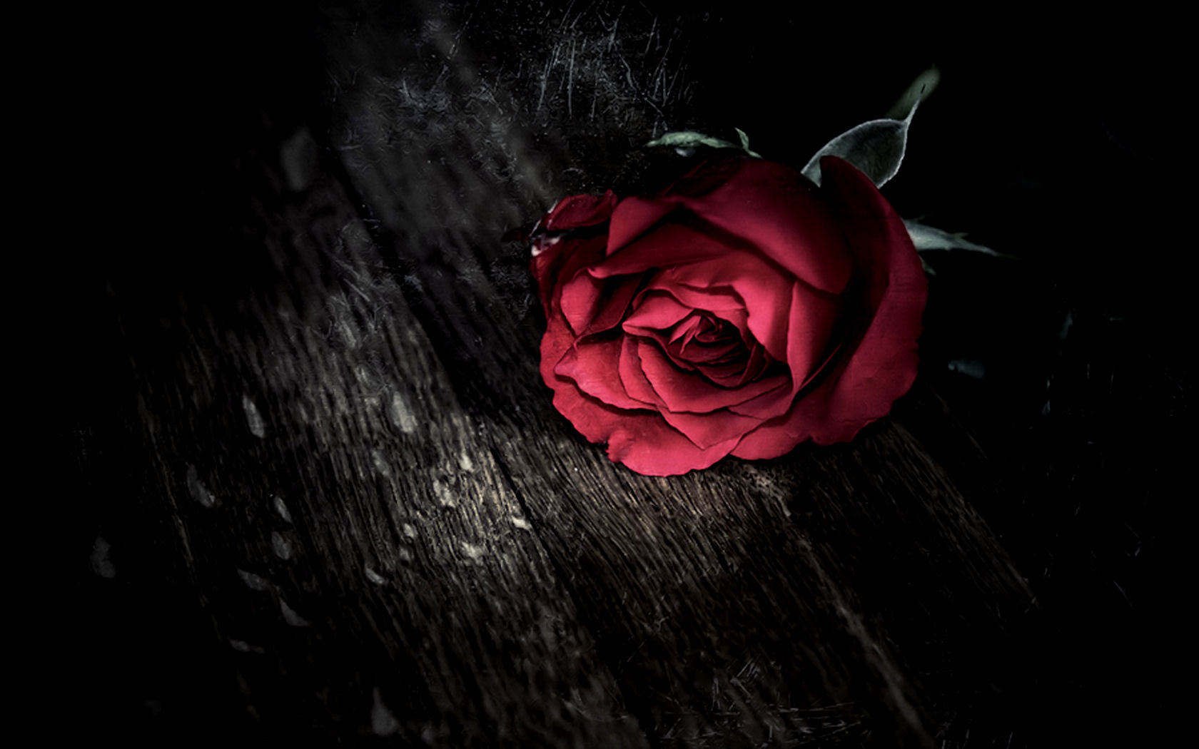 Hd wallpaper rose - Red Flower Roses Free Hd Wallpaper For You
