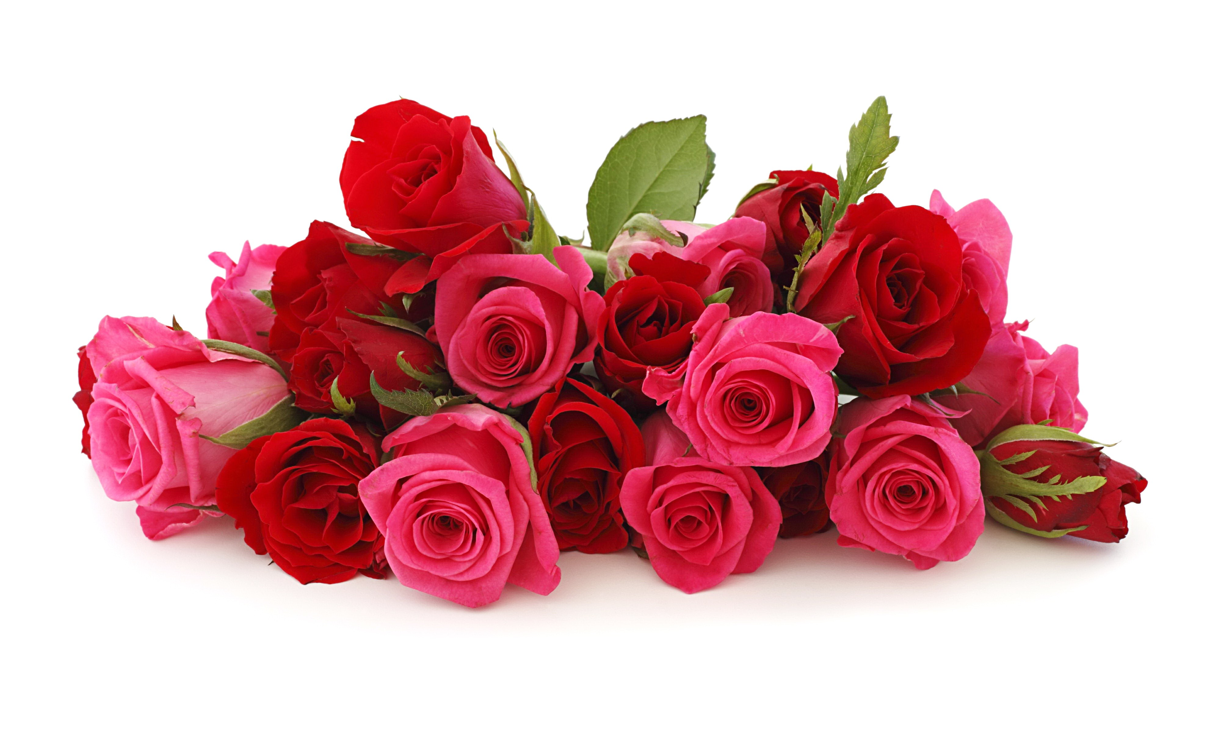 Hd wallpaper red rose -  Red Pink Nie Red Roses Free Hd Wallpapers