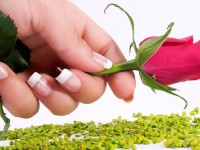 red-rose-with-hand-free-hd-wallpapers