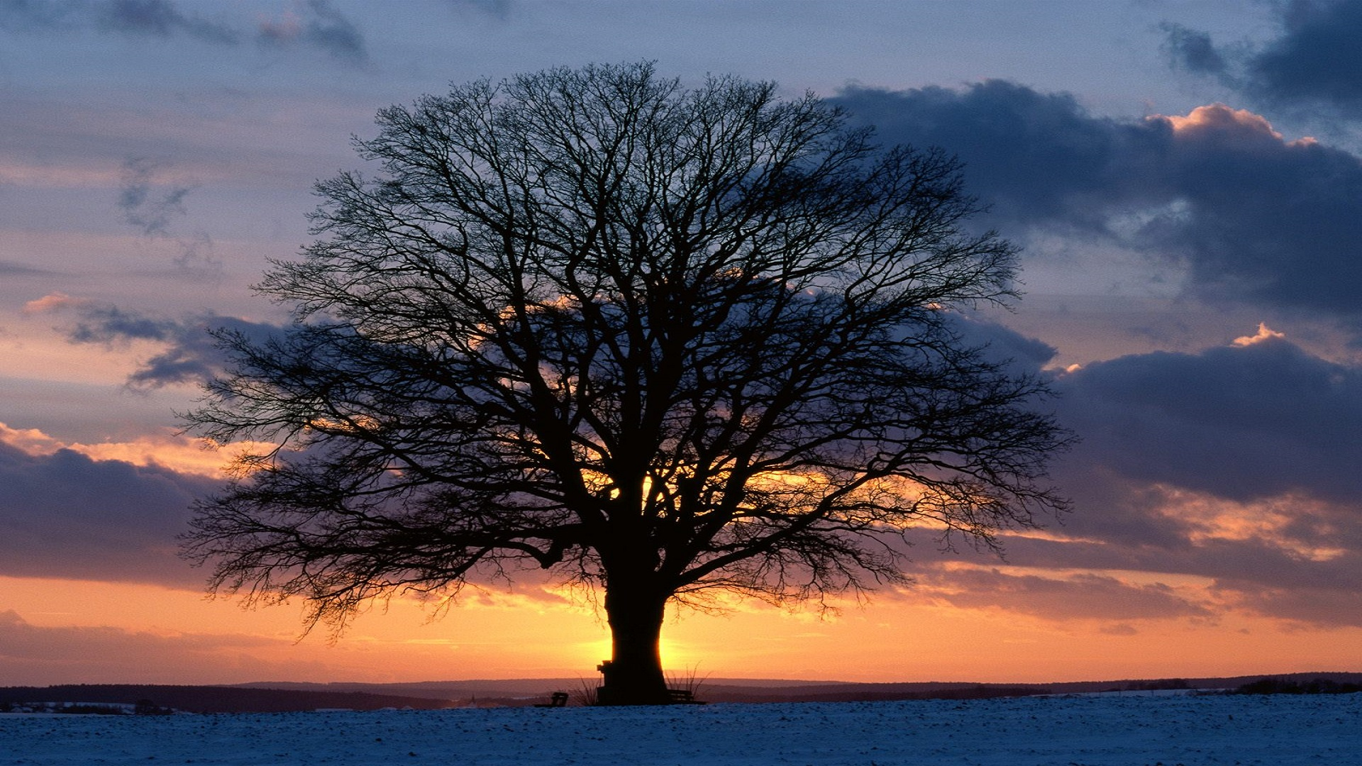 Tree In Sunset Free Hd Wallpapers Hd Wallpaper