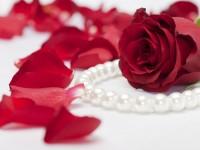 waoooo-amazing-look-wallpaper-hd-free-red-rose