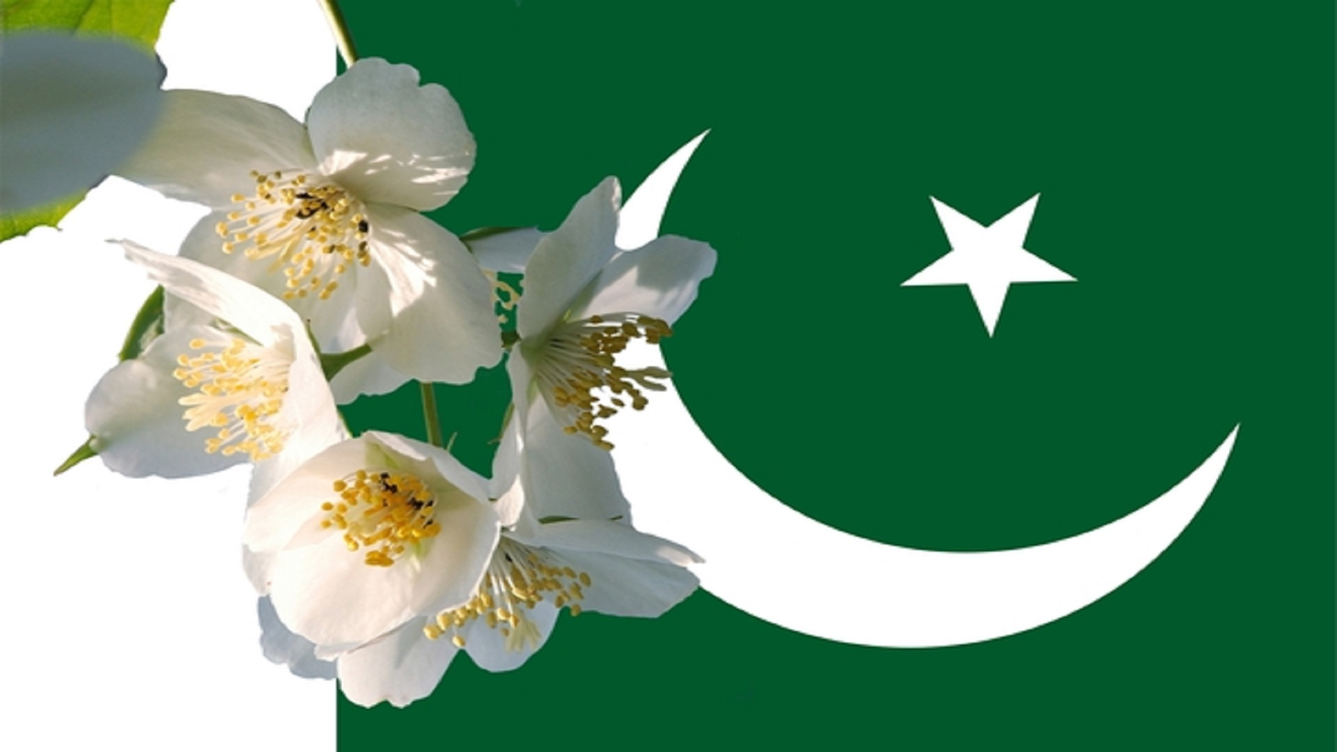 white-flowers-with-pakistani-flag-free-wallpapers-hd