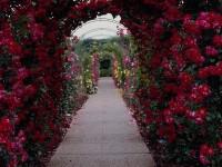 Beautiful-White-Rose-Flower-Wallpapers-HD-Free-for-desktop