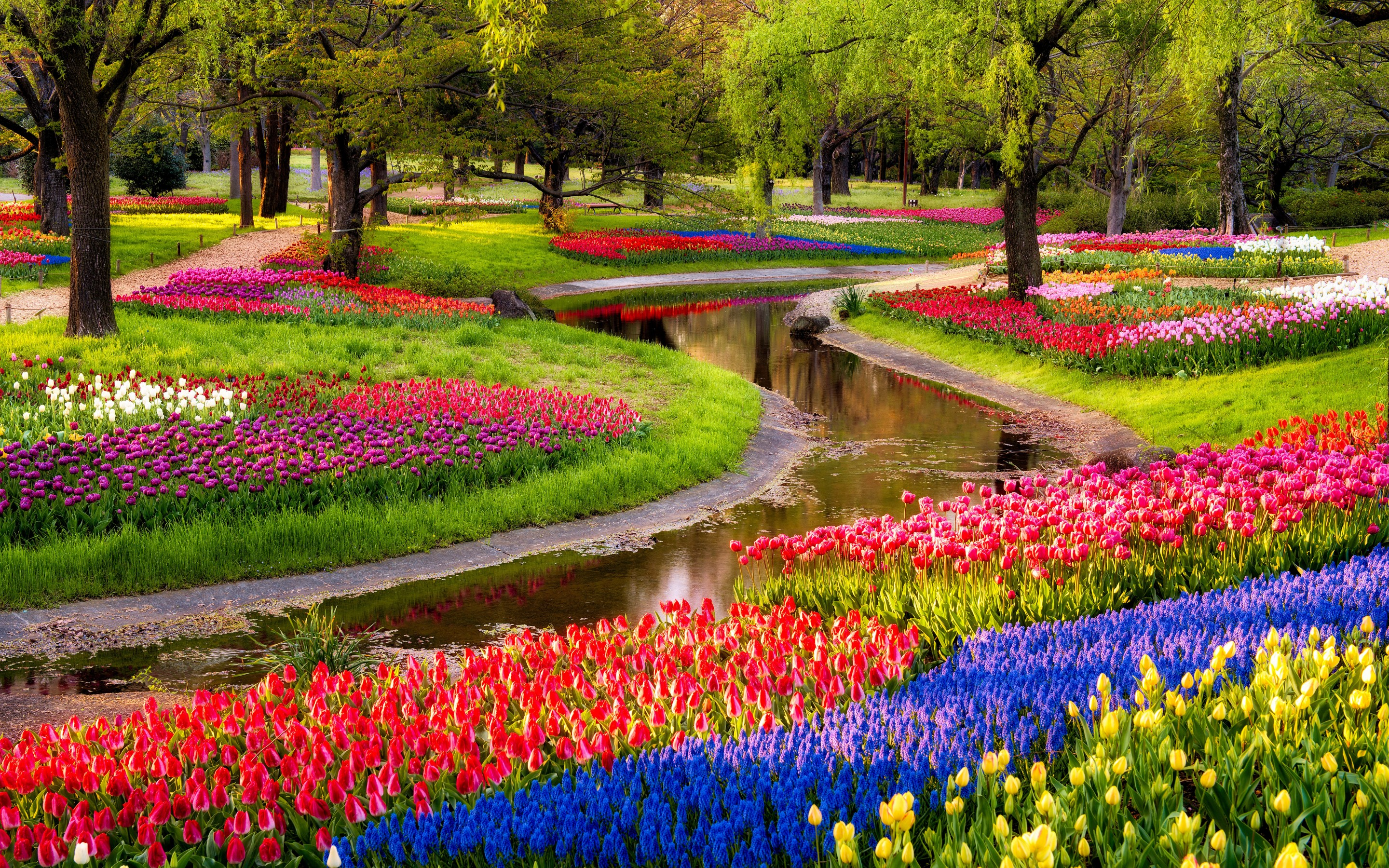 Charmant Colorful Garden Flowers Hd Free Wallpapers