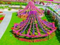 Dubai-Miracle-Garden-free-hd-wallpapers-for-desktop