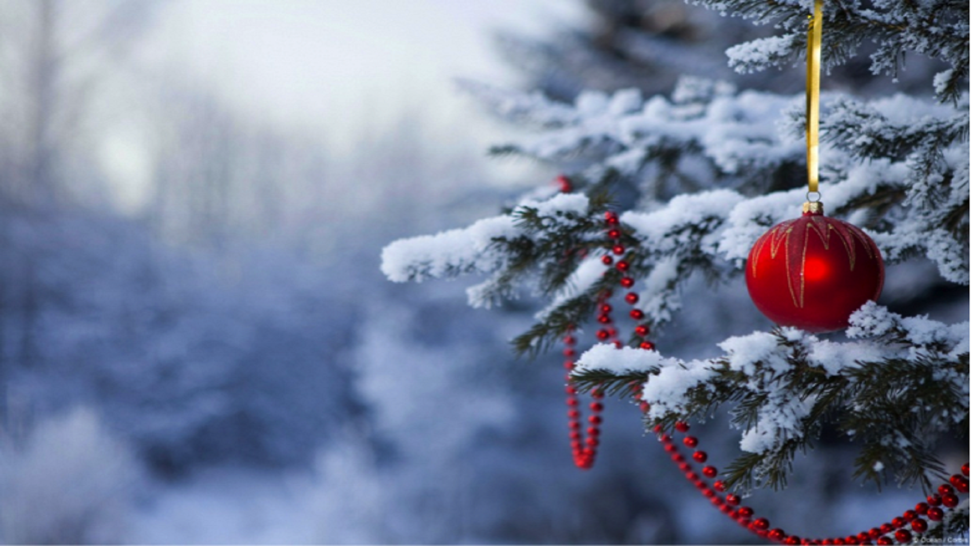 festive-christmas-tree-wallpaper-free-hd - hd wallpaper