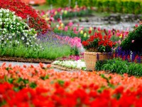 Flowers-Garden-HD-Wallpapers-free-for-desktop