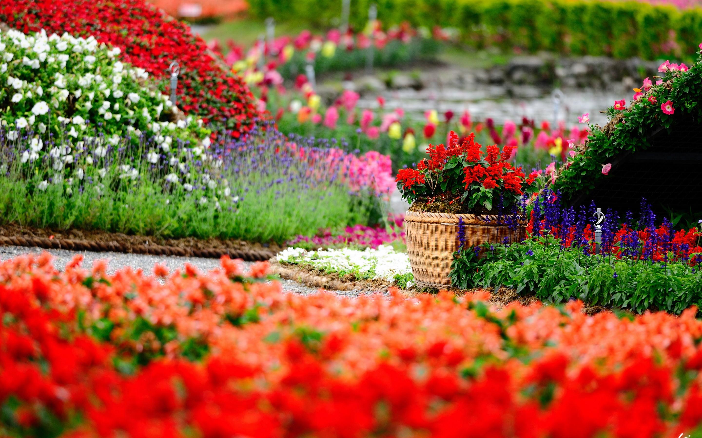 Flowers Garden HD Wallpapers Free For Desktop