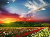 Rose-flowers-garden-wide-new-desktop-wallpapers-in-hd-free-for-desktop