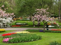flower-garden-hd-free-wallpapers-download