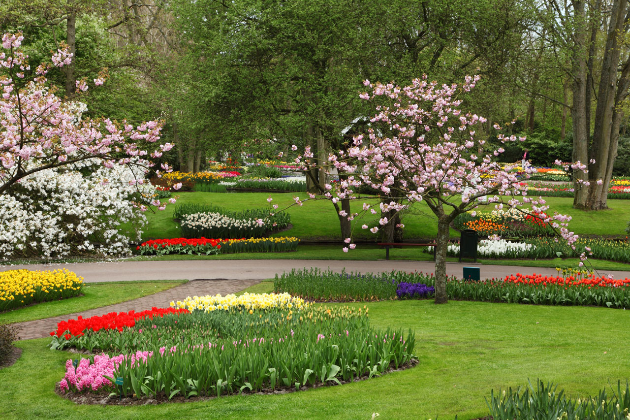 Flower garden hd free wallpapers download
