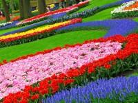 flower-gardens-free-wallpapers-for-desktop