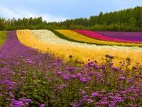 flower-wallpapers-flowers-free-hd-for-desktop