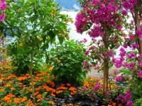 flowers_garden_sea_mountains_beauty_free_hd_wallpapers