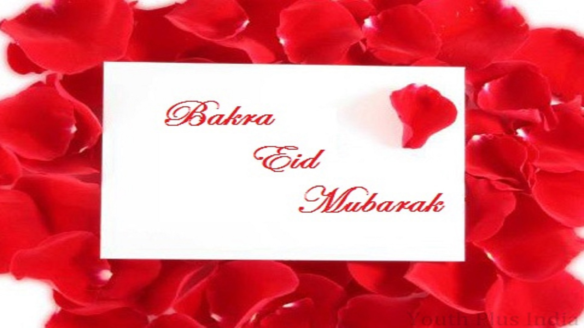 latest-happy-bakra-eid-mubarak-free-hd-wallpapers - hd wallpaper