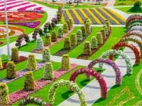 most-beautiful-flower-garden-free-hd-wallpapers