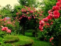 pink-rose-garden-top-hd-wide-wallpapers-free-for-desktop